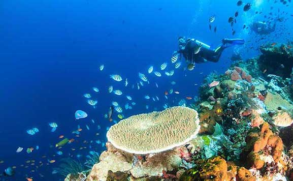 banda sea diving