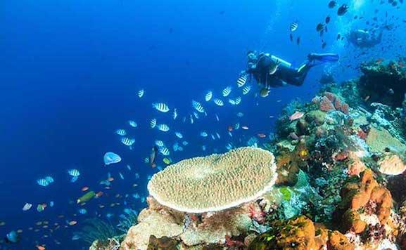 banda sea diving