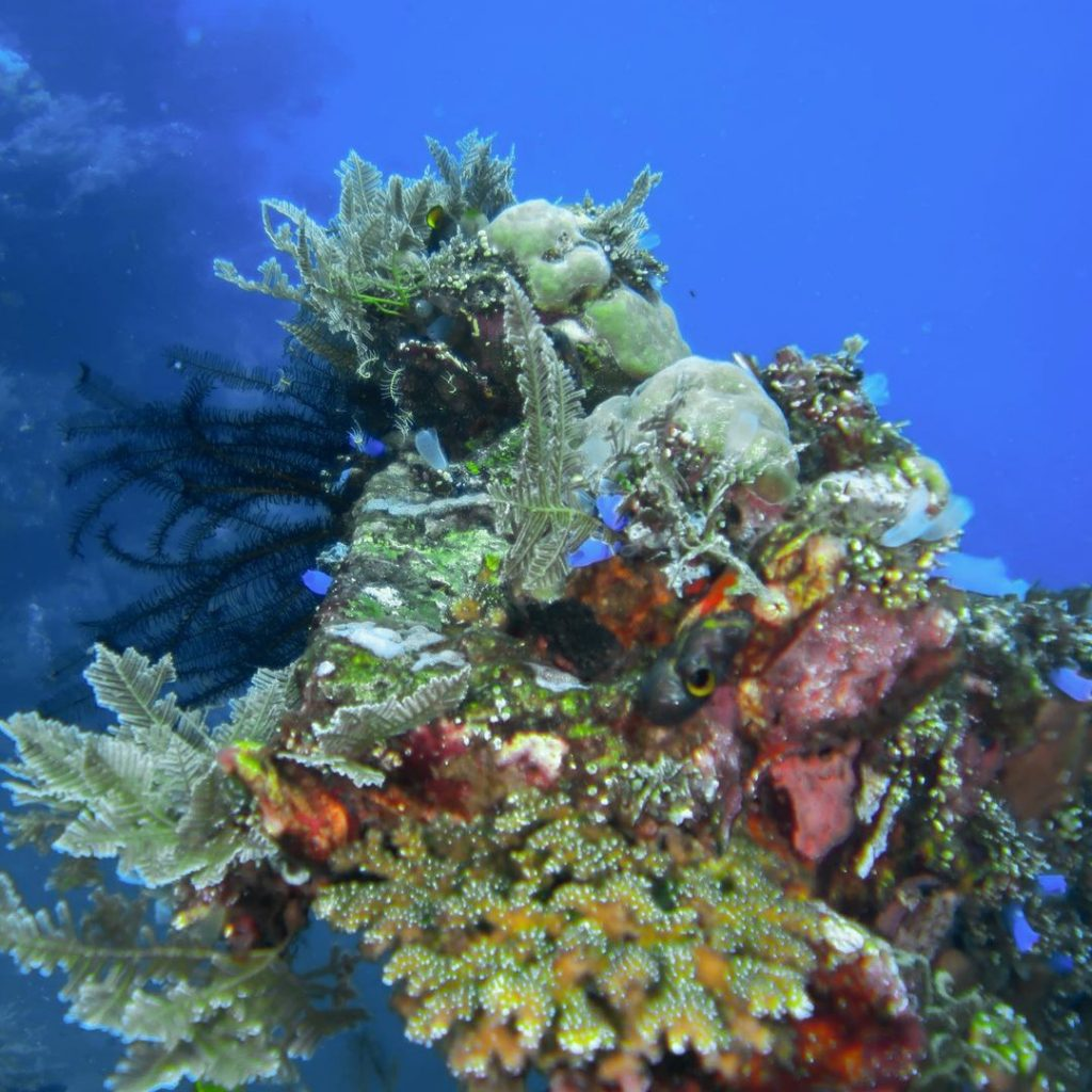 Points Out Marine Life in Wreck Diving Bali