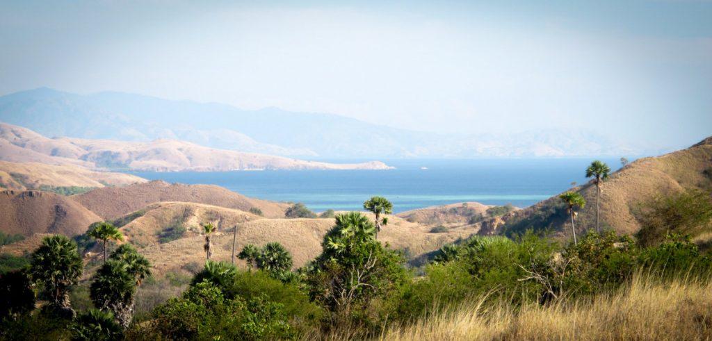 rinca island - dominated by the savanna